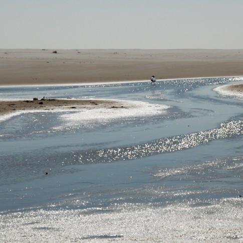 Strand und Priel mit Möwe