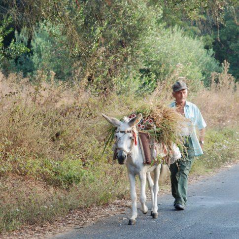 Mariella Knabe, Arbeiter mit Lastesel auf Korfu