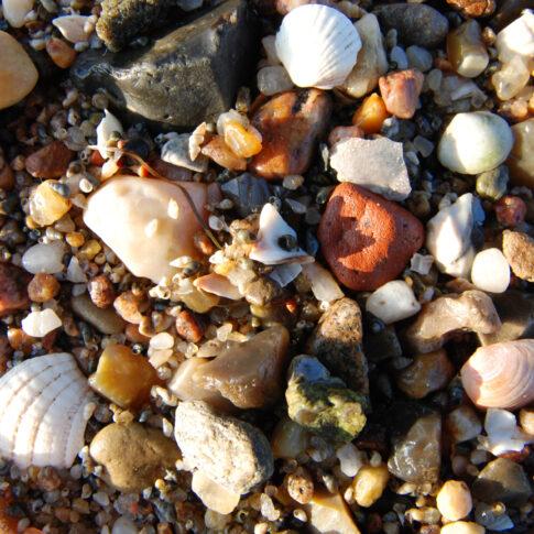 So bunt geht es zu auf nur wenigen Quadratzentimetern Strand