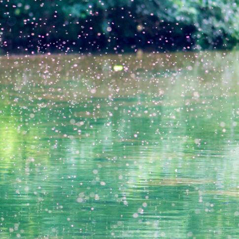 Auf dem Teich wimmelt es in der Sommerhitze nur so von kleinen Insekten. Die Farben sehen aus wie tausende Pinseltupfer