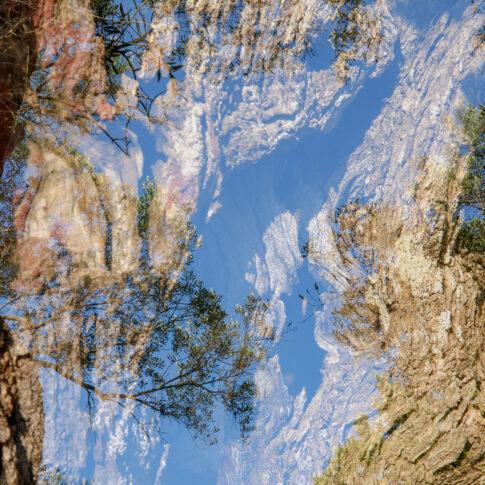 manuelle Doppelbelichtung bestehend aus Korkeiche und Olivenbaum