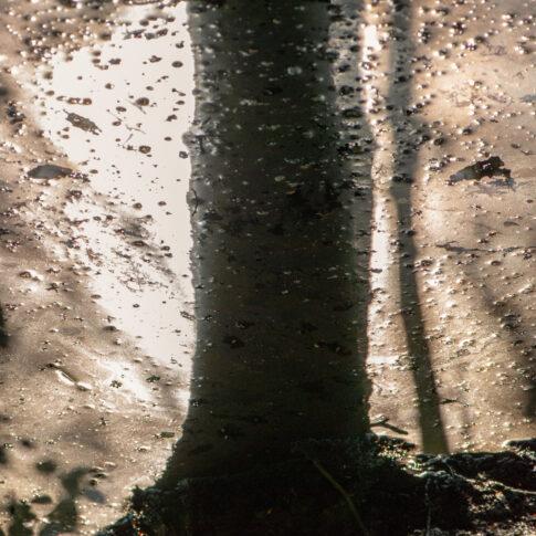 Der Schatten eines Baumes fällt auf das mit Blüttenstaub gesättigte Wasser im Uferbereich eines Teiches