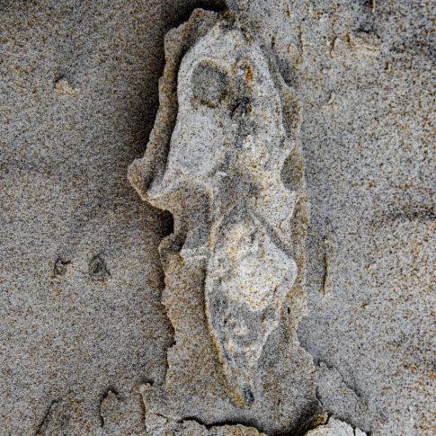geformt aus Sand und Schlick die Anmutung eines Seepferdchens