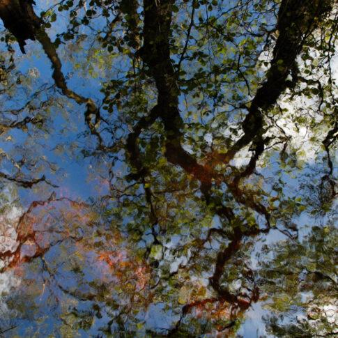 Himmel, Wolken und Schwarzerlen, die im Moor wachsen, spiegeln sich im Wasser; am Grund leuchten rostrot verrottende Blätter und anderes Pflanzenmaterial; alles zusammen verleiht dem Wasser die verschiedensten Farben